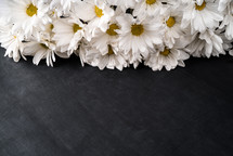 white daisies on a black background