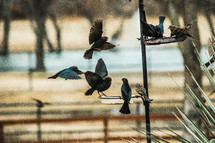 birds fighting for spots at the bird feeder