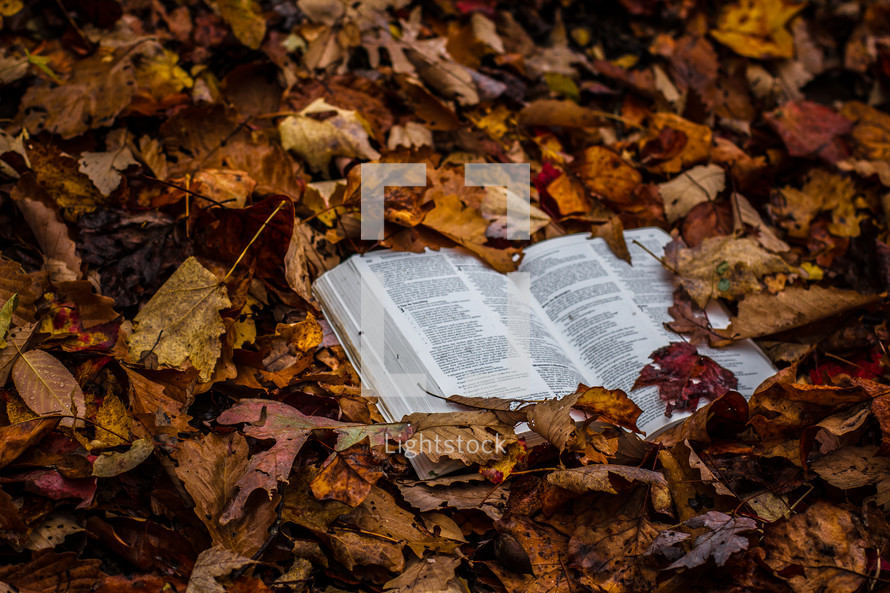 Bible buried in a pile leaves