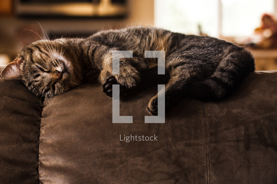 A cat resting on a couch