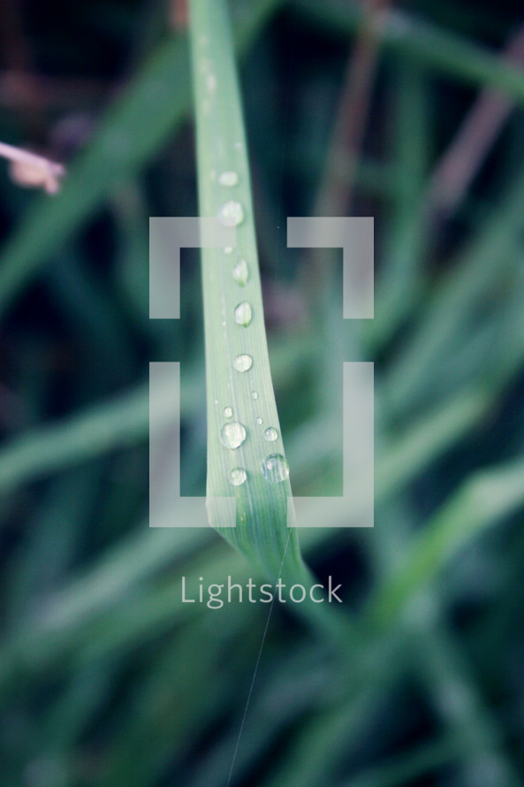dew on a blade of grass