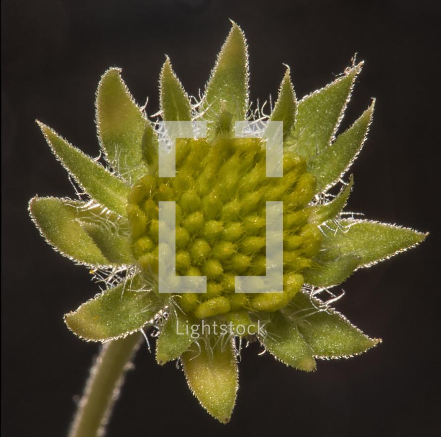 Cactus flower in bloom.