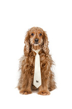 dog wearing a tie
