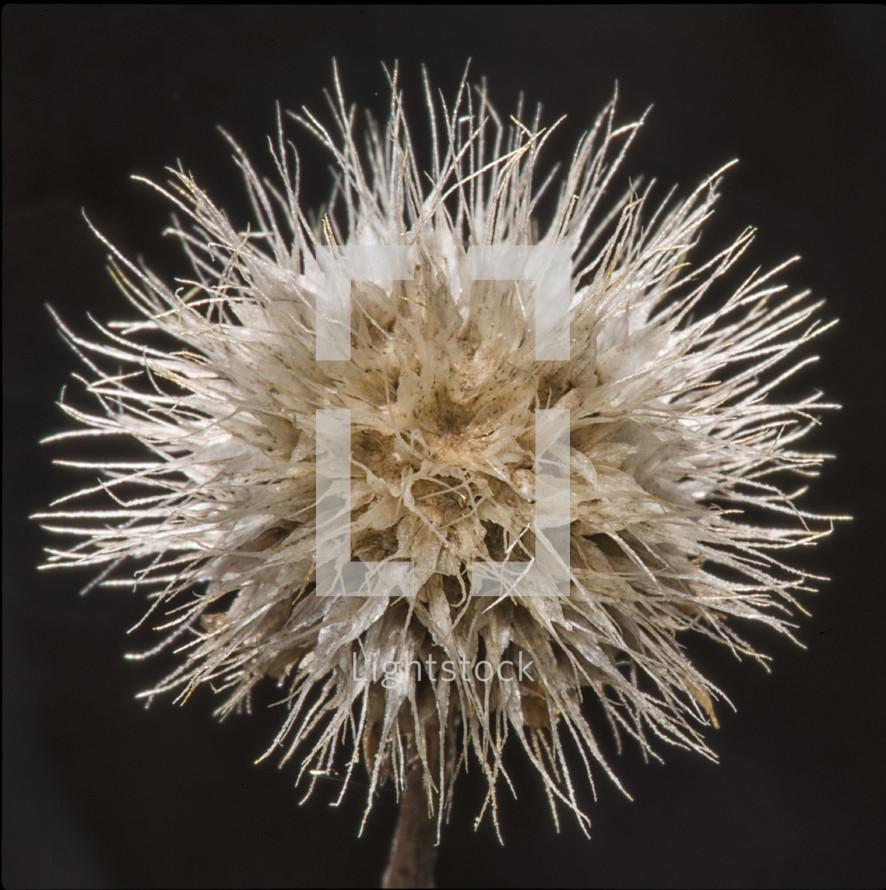 fuzzy flower