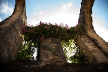 wisteria growing on the top of an old building in ruins