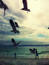 Seagulls flying on beach