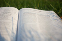 an open Bible lying in grass