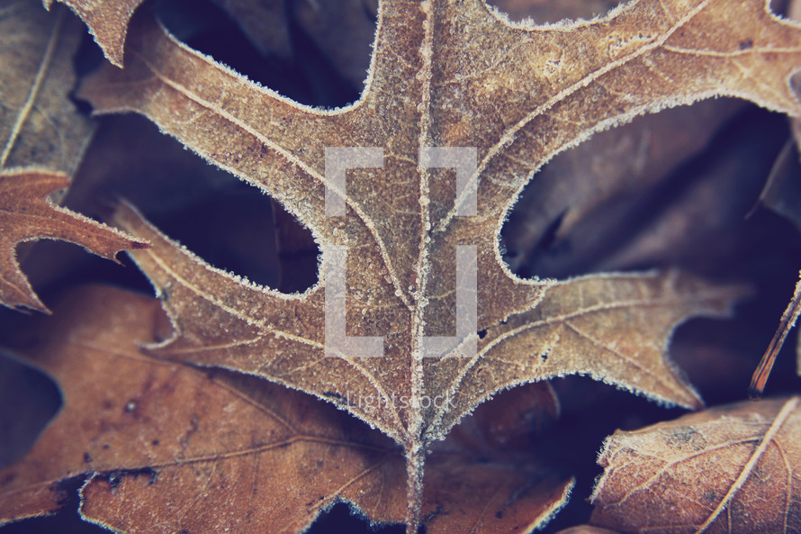 frost on a fall leaf