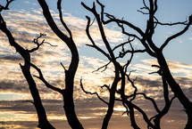 silhouette of bare tree branches at sunset