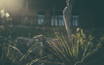 porch, sunlight, plants, rocks, outdoors