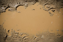 Dirty water in a mud puddle.