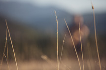 field of grass out of focus