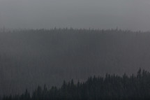 layers of forest in the evening