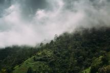 fog over a green terraced mountaintop