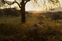 mushrooms growing under a tree
