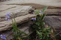 wild flowers growing on rock
