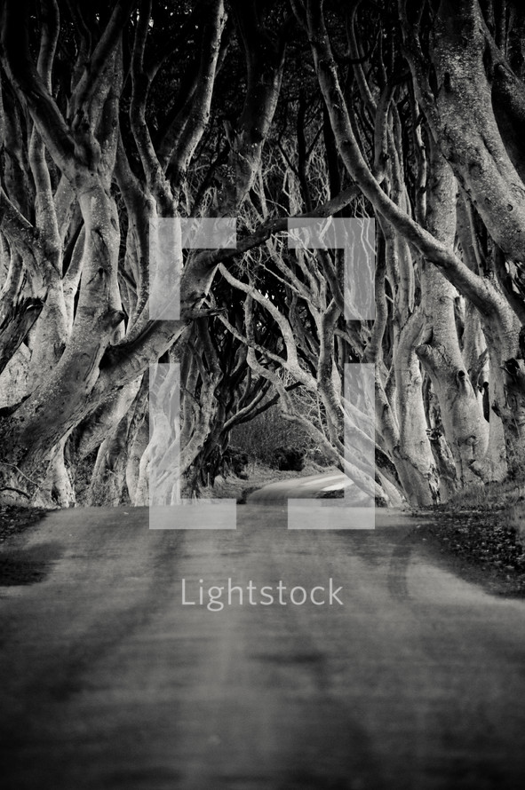 trees lining a road