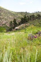 Green grass and purple thistles among hills.