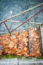 fall leaves on steps