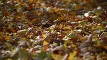 colorful autumn leaves laying on the ground and swirling in the wind.