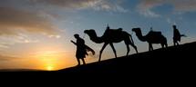 man leading camels