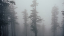 trees in fog