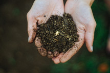 seed in soil in the palms of the hands