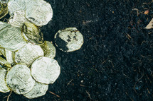 gold coins on soil