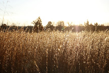 warm sunlight on brown grasses in a field