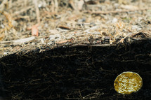 gold coin on soil