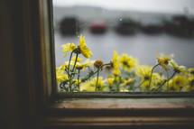 yellow flowers in a window flower box