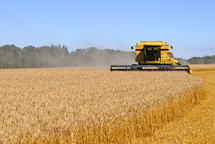 Combine harvesting a field of wheat. fall, season, seed,