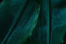 wet green leaves