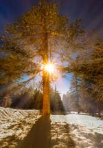 sunburst through pine trees in a forest
