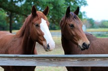 Two horses in a corral