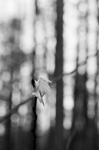 torn white cloth on a twig