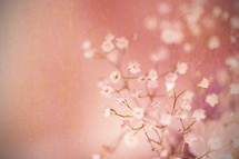 tiny white flowers against a pink background