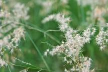 Closeup of wildflower