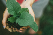 gardening, a new plant in cupped hands
