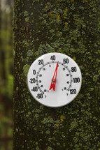 thermometer on a tree trunk