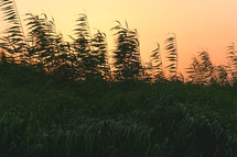 tall grasses and orange sky at sunset on the Nile River