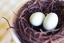 bird eggs in a nest