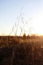warm sunlight on brown grasses