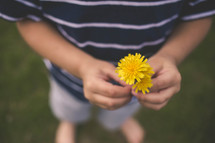boy child holding a dandelion
