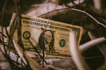 a dollar bill caught in weeds