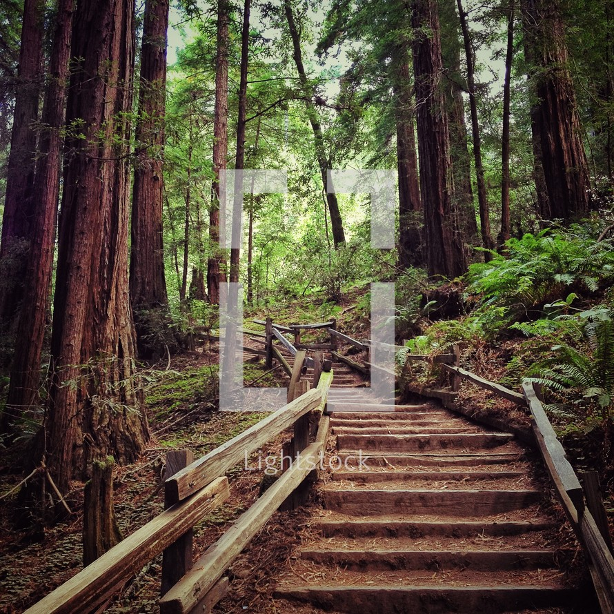 Wooden steps lined with wooden hand rail leading into heavily treed forest.