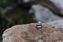 wedding bands on rocks