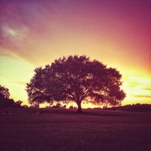 Trees, park and sunset