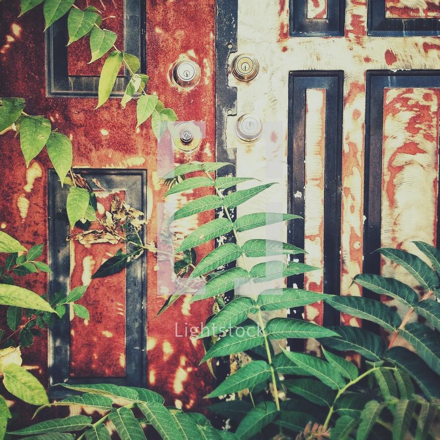 bushes growing in front of a long unopened door