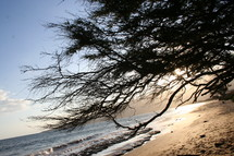 tree silhouette over the rolling waves of the ocean washing onto a beach